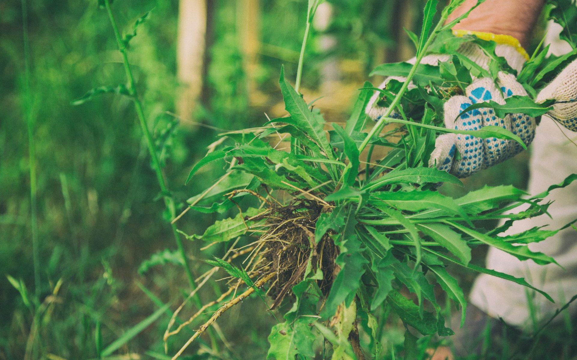 méthodes naturelles entretien jardin