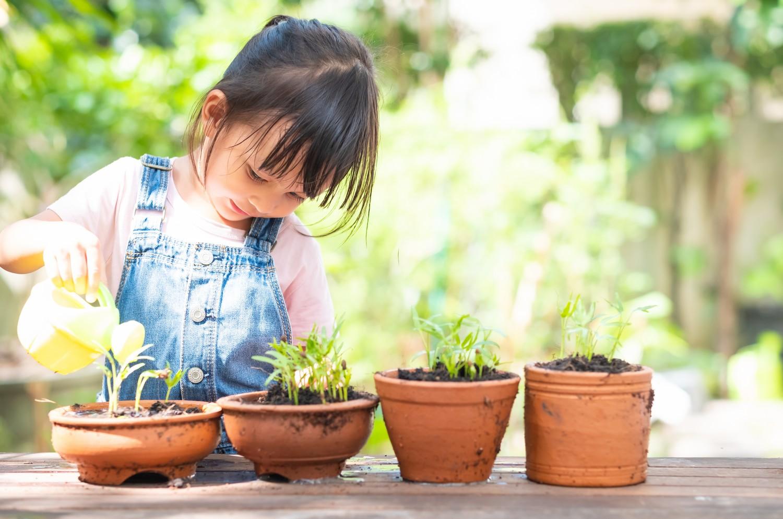 entretien plantes
