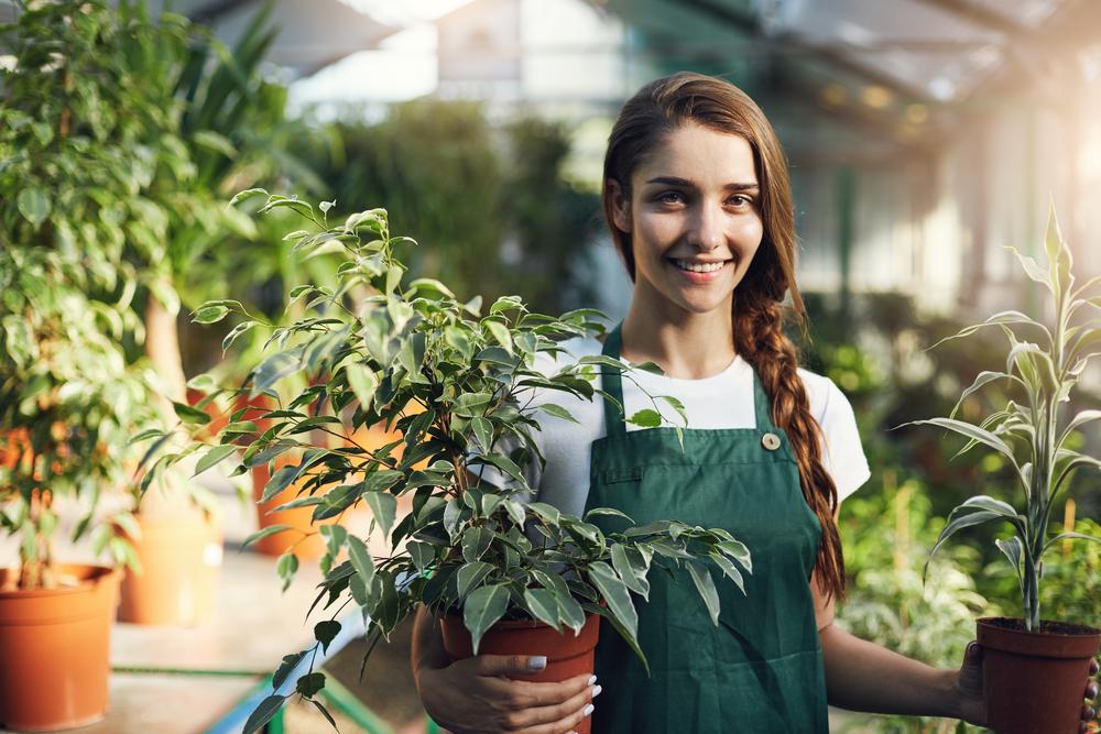 préserver plantes hiver