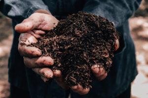 Favorisez les plantes qui nourrissent votre sol de jardin