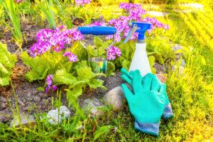 Entretenir son jardin en été