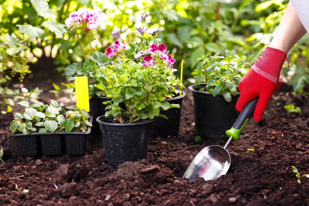 entretien plante