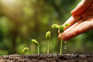 Comment avoir un jardin écologique