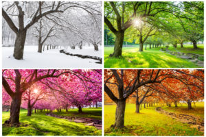 Entretenir son jardin selon les saisons